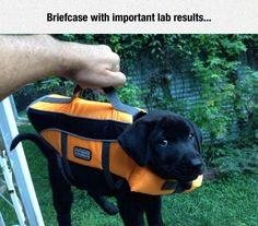 Lab Results #lol #haha #funny