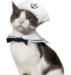 cute cat sailor costume ~ wonder how long he/she stayed in uniform? :D