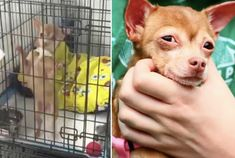 puppy-mill-freedom-ride-featured