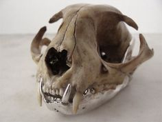 silver jaw / skull / Espèces www.especes-especes.com