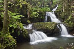 Jungle Waterfall, South Hilo, Hawaii - go here! Big Island Hawaii, Places To Travel, Places To See, Jungle Life, Kona Hawaii, Water Pictures, Hawaiian Islands, Island Life, Best Vacations