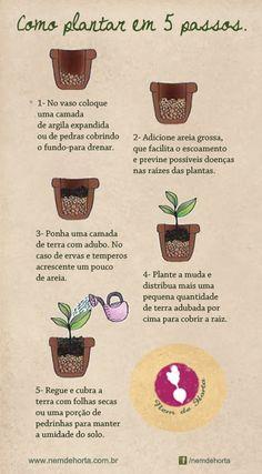 Aprenda a plantar em 5 passos. Fácil, fácil!