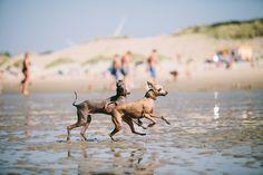 Windspielmama   Vrouwenpolder – 1 Tag am Meer