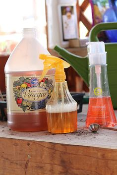 Vinegar Weed Killer No Chemicals Apple Cider 1 T Dish Soap Not Dawn Mixed In A Spray Bottle Add Then