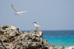 """Un santuario de aves en """"La isla del tesoro"""""""