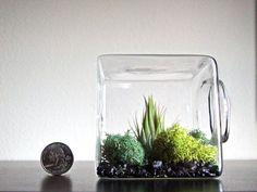 Stackable Living Eco Cube / Modern Air Plant by eGardenStudio - DIY idea?