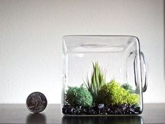 Air Plant Eco Glass Cube // Modern Air Plant by eGardenStudio