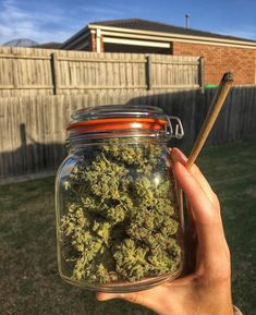 Buy Weed Online with Bigbudworld- The Evolution of Buy Marijuana Online Weed Girls, Stoner Art, Weed Art, Cbd Oil For Sale, Puff And Pass, Manicure Y Pedicure, Buy Weed Online, Online Buying, Cannabis Oil