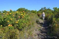 Scenes from Nelson Mandela Bay and surrounds in the Eastern Cape of South Africa Port Elizabeth South Africa, Nelson Mandela, Daily Photo, Hiking, Country Roads, Van, Walks, Trekking, Vans