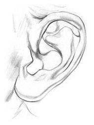 Draw ear step 3