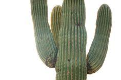 Awesome Saguaro