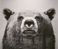 Andreas Lie is a visual artist based in Norway who is making double exposure photography awesome again. Lie's digital, double exposure animal portraits harmoniously superimpose an animal's natural habitat within the animal. Canvas Wall Art, Canvas Prints, Art Prints, Portraits En Double Exposition, Art D'ours, Blog Fotografia, Double Exposure Photography, Foto Art, Bear Art