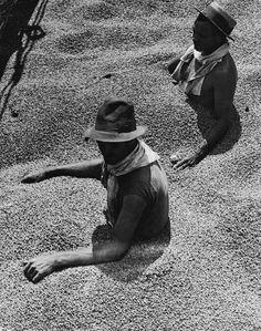 by Martin Munkacsi | Choked with coffee Barzil 1932