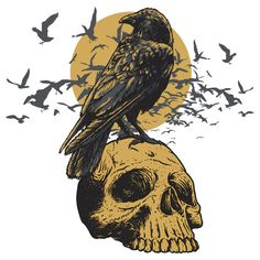 Skull and a Crow