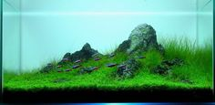 Planted Tank The Claw by A. Adhikary - Aquascape Awards