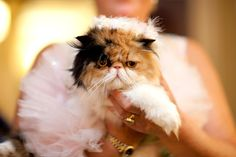 """...that is one happy looking cat... from """"feline fashion week"""" no lie"""