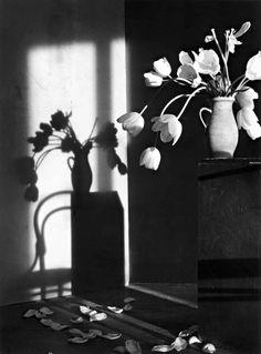 Christian Coigny - Still Life. tulips
