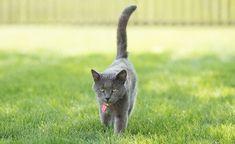 Cat Center Embrace Pet Insurance, Best Pet Insurance, Pet News, Cats, Animals, Gatos, Animales, Animaux, Animal