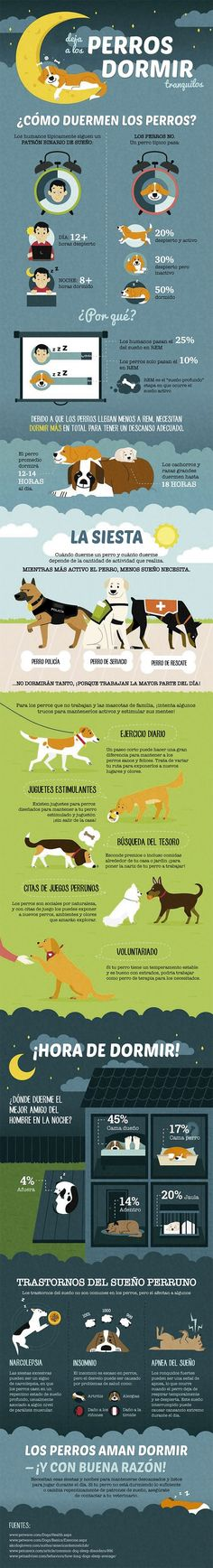 Dog Infographic Let Sleeping Dogs Lie Www Dailydogtag C Many people store fat in the belly, and losing fat from this area can be hard. Here are Dog Infographic Let Sleeping Dogs Lie Www Dailydogtag C tips to lose belly fat, based on studies. Yorkie, Chihuahua, Pomeranian, Dog Care Tips, Pet Care, Puppy Care, Education Canine, Sleeping Dogs, Dog Training Tips