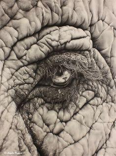 Dumbo The Elephant, Bull Elephant, Pencil Drawings Of Animals, Animal Sketches, Elephant Tattoos, Elephant Drawings, Earth Drawings, Elephants Photos, Eyes