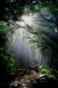first light of the morning touches unknown depths of the forest...