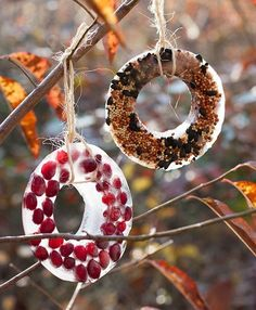 For your inspiration, I have compiled more than 50 Unique Homemade Bird Feeders Ideas. They are easy and quick DIY bird feeders you can reproduce with kids. Bird Seed Ornaments, Diy Christmas Ornaments, Holiday Crafts, Christmas Things, Christmas Ideas, Homemade Bird Feeders, Diy Bird Feeder, Ice Crafts, Crafts For Kids