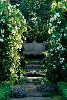 THYME WALK TO WOODEN SEAT WITH WHITE ROSES AND PEBBLE POOL. CARTIER/HARPERS & QUEEN GARDEN.