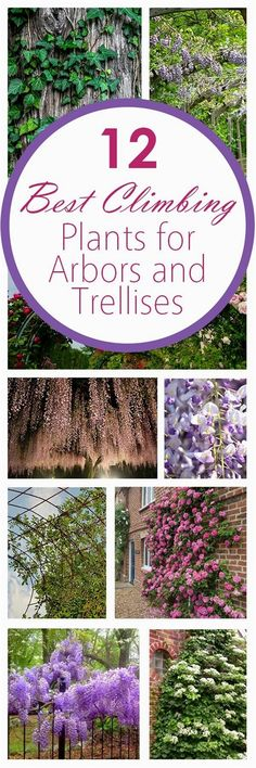 12 Best Climbing Plants for Arbors and Trellises. William - some great ideas for the condo after our wedding https://weddingmusicproject.bandcamp.com/album/wedding-processional-songs-for-brides-bridesmaids #FlowerGarden