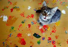 Na Austrália, gatinhos criam pinturas abstratas com as patas. A renda obtida com a venda das telas ajuda a pagar as despesas de animais resgatados da rua