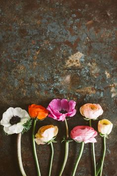 Lovely anemones against a stone background. Floral. Colour.
