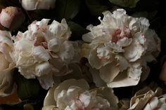 #peony #white #peace # flowers #handmade