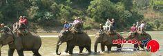 One Day Tour Mae Tang Elephant Safari