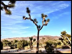 Black Rock Campground in Yucca Valley, CA