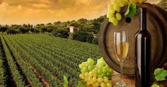 Sula Vineyards Receives Three Awards At DelWine Excellence Awards