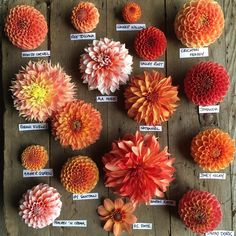 up.all the oranges in bloom in the garden. Working through the rainbow of beauty I am enjoying each day.Next up.all the oranges in bloom in the garden. Working through the rainbow of beauty I am enjoying each day. Dahlia Bouquet, Dahlia Flower, Cut Flower Garden, Flower Farm, Deco Floral, Arte Floral, Orange Flowers, Beautiful Flowers, Orange Wedding Flowers