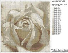 White Rose --- Pattern is at the bottom of my board....