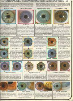 ee70a0083826813ba7cd490e49ee7351--eye-chart-eye-color-chart.jpg (736×1012)