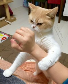 岡田モフリシャスと猫の小雪(@moflicious)さん | Twitter