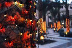 lights by Lee D.