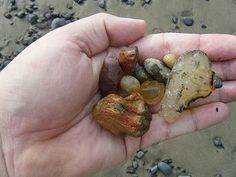 Rockhounding the Oregon coast is a dream! Rocks, minerals and fossils abound, as do OREGON AGATES! Here are the top 3 locations to look for beautiful agates in the state of Oregon. Included are where to find Agates in Oregon Rivers and Oregon Coast. Oregon Coast Roadtrip, Southern Oregon Coast, Oregon Beaches, Oregon Road Trip, State Of Oregon, Oregon Trail, Oregon Vacation, Vacation Spots, Yachats Oregon