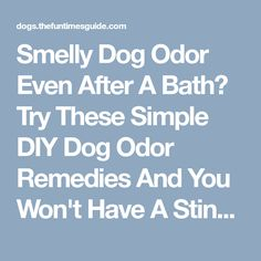 De Skunk Your Dog With Hydrogen Peroxide Baking Soda And