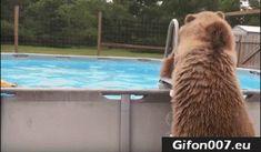 bear, swimming pool, jump, gif, funny animals, summer
