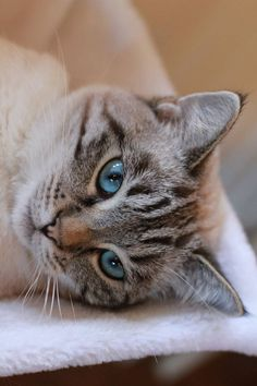 Beautiful eyes !!