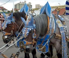 Horses on the Oktoberfest -Brewery horses (Belgian Heavy Horses: Brabanter) of one of the six Munich Breweries on the Oktoberfest