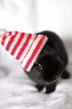 Thanks to my sister-in-law, I now want a dwarf bunny from blueribbonrabbits.com
