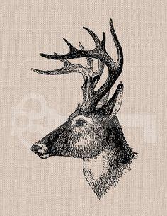 Buck Head Illustration Digital Graphic  No310 by TanglesGraphics, $1.00