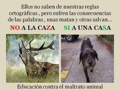 Educación contra el maltrato animal