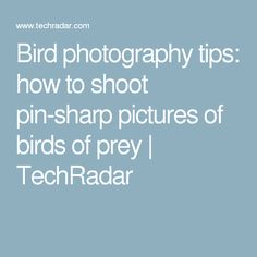 Bird photography tips: how to shoot pin-sharp pictures of birds of prey | TechRadar