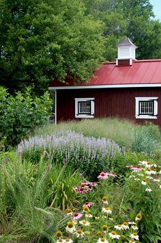 A rain garden built just outside a Horse pasture to help limit nutrient run-off.