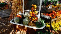 Marshall's Farm Fresh Food